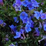 Como Cuidar de Violetas